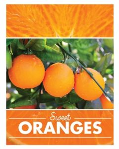 Poster Produce- Oranges